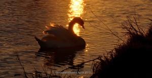 Setting in a Golden Sun